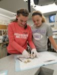 Middle School girls dissecting sheep's brain